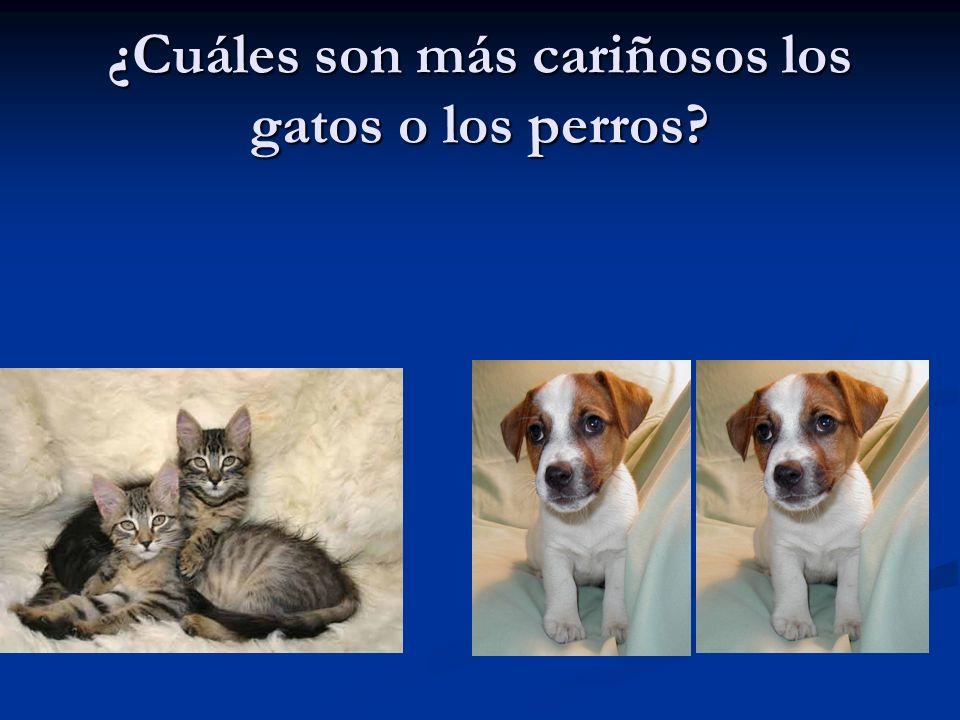 ¿Cuáles son más cariñosos los gatos o los perros