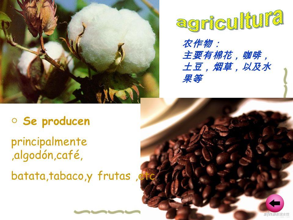 agricultura ○ Se producen principalmente ,algodón,café,