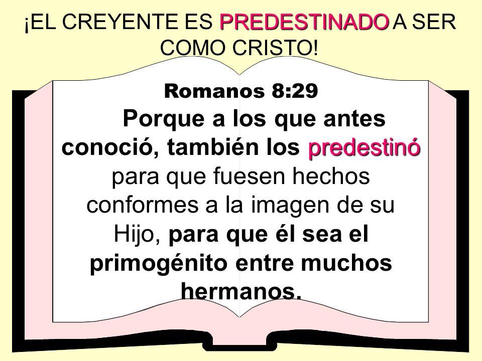 ¡EL CREYENTE ES PREDESTINADO A SER COMO CRISTO!