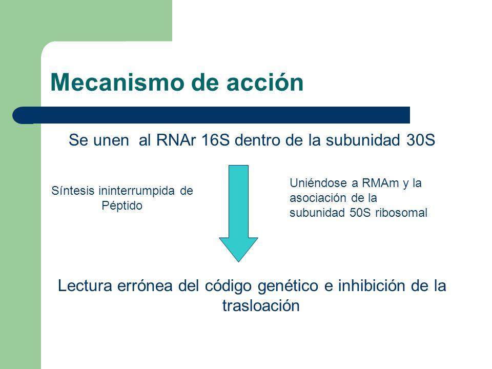 Mecanismo de acción Se unen al RNAr 16S dentro de la subunidad 30S