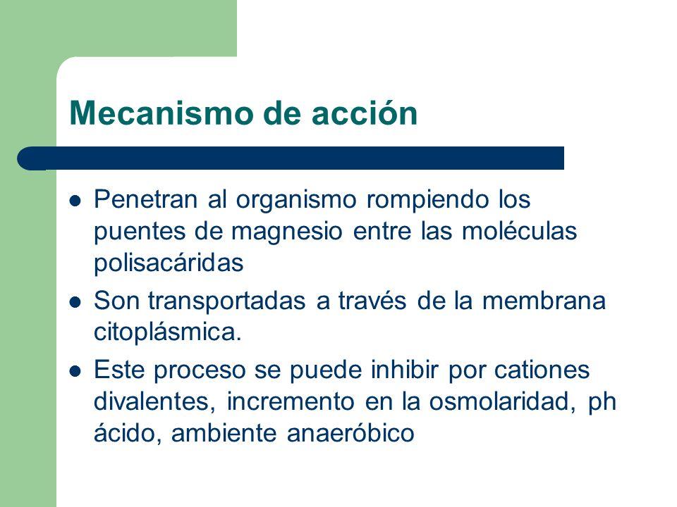 Mecanismo de acción Penetran al organismo rompiendo los puentes de magnesio entre las moléculas polisacáridas.