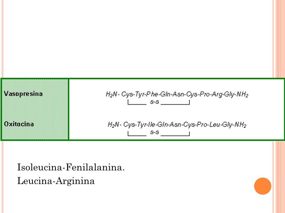 Isoleucina-Fenilalanina.