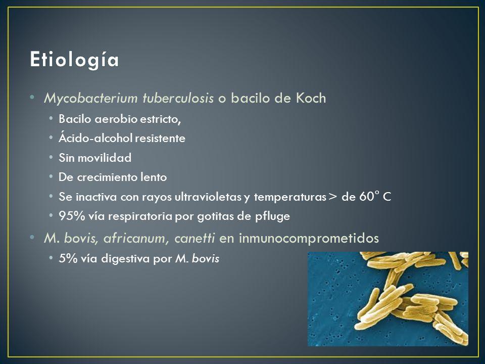 Etiología Mycobacterium tuberculosis o bacilo de Koch