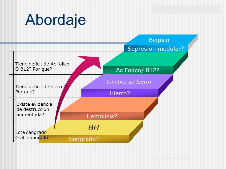 Abordaje BH Biopsia Supresion medular Ac Folico/ B12 Hierro