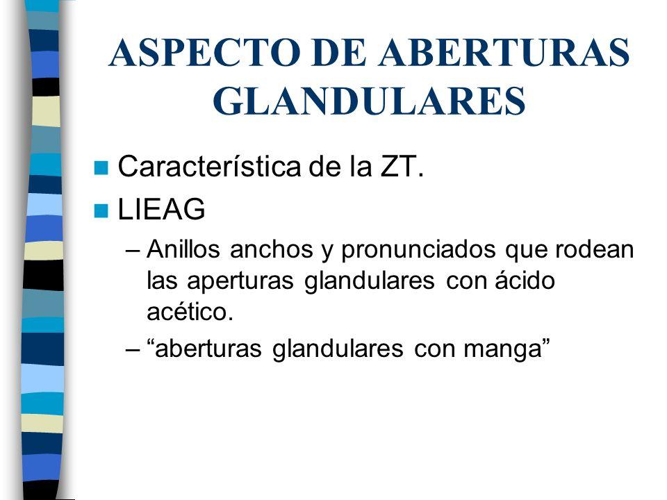 ASPECTO DE ABERTURAS GLANDULARES