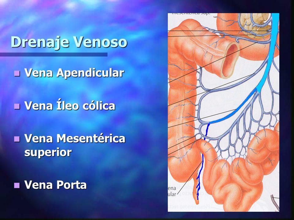 Drenaje Venoso Vena Apendicular Vena Íleo cólica