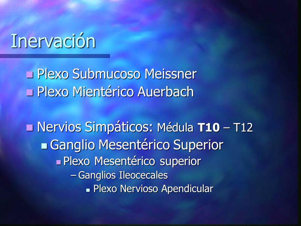 Inervación Plexo Submucoso Meissner Plexo Mientérico Auerbach