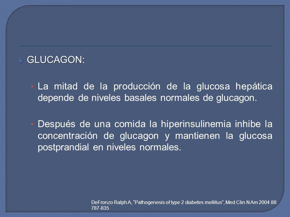 GLUCAGON: La mitad de la producción de la glucosa hepática depende de niveles basales normales de glucagon.