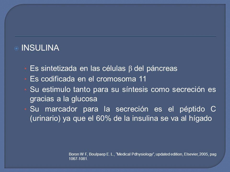 INSULINA Es sintetizada en las células β del páncreas