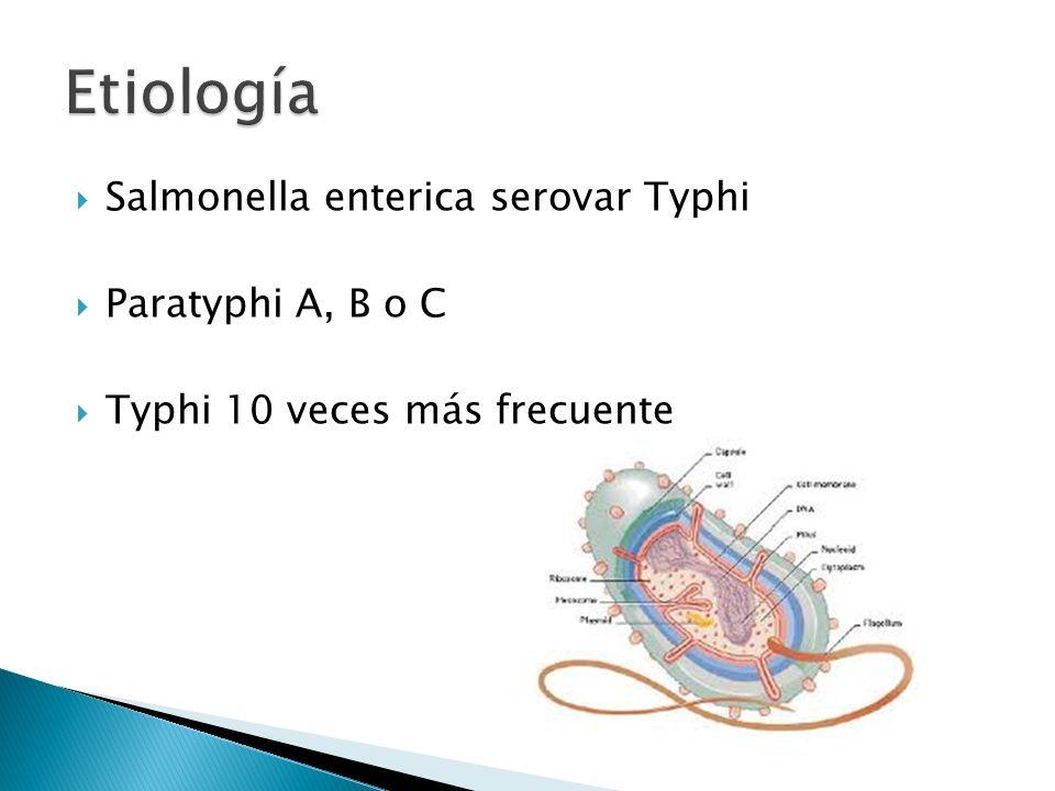 Etiología Salmonella enterica serovar Typhi Paratyphi A, B o C