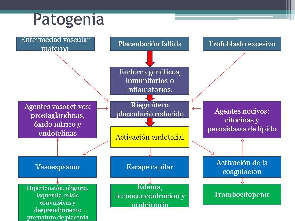 Patogenia Enfermedad vascular materna Placentación fallida