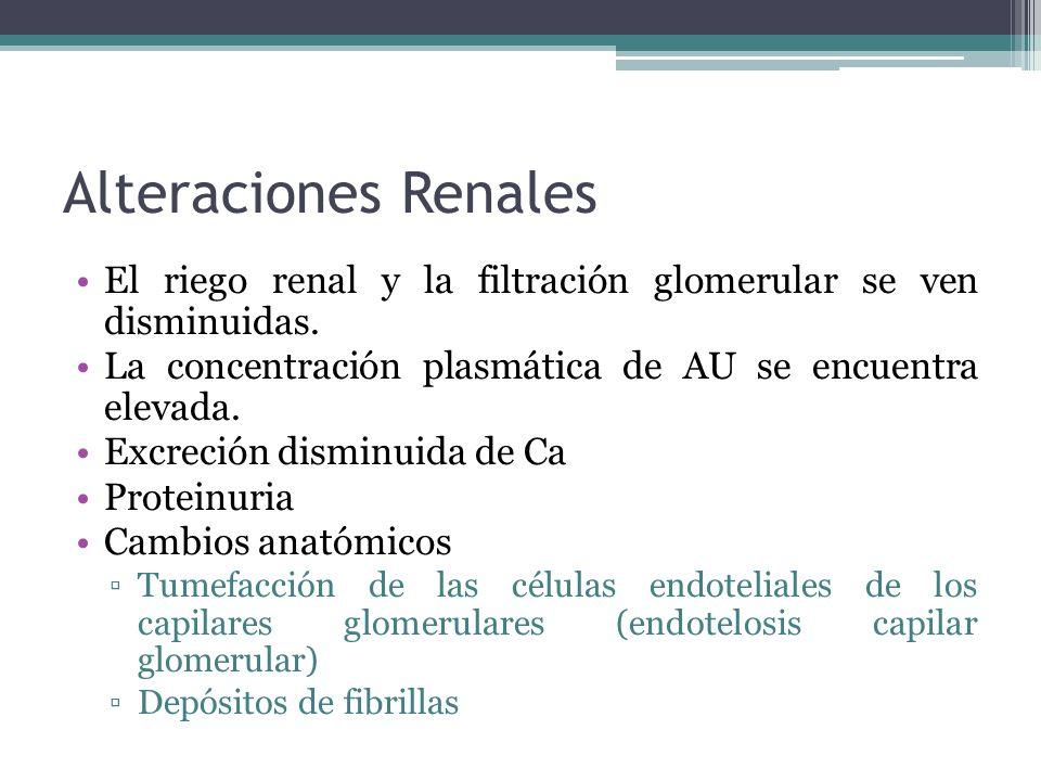 Alteraciones Renales El riego renal y la filtración glomerular se ven disminuidas. La concentración plasmática de AU se encuentra elevada.