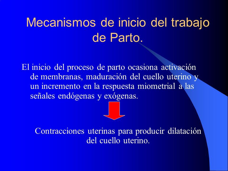Mecanismos de inicio del trabajo de Parto.
