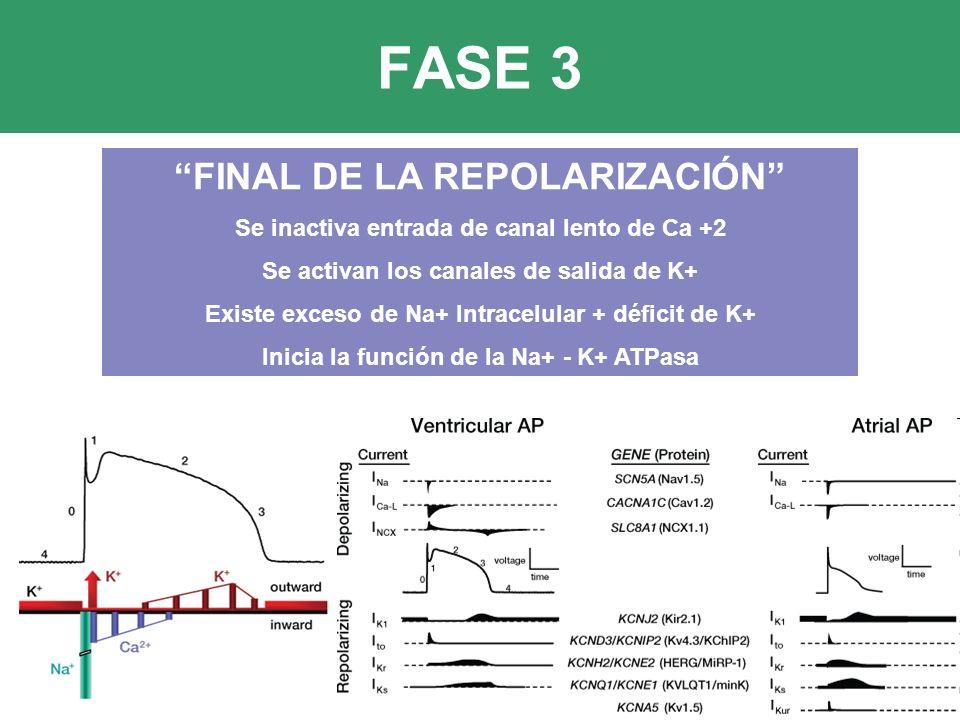 FASE 3 FINAL DE LA REPOLARIZACIÓN