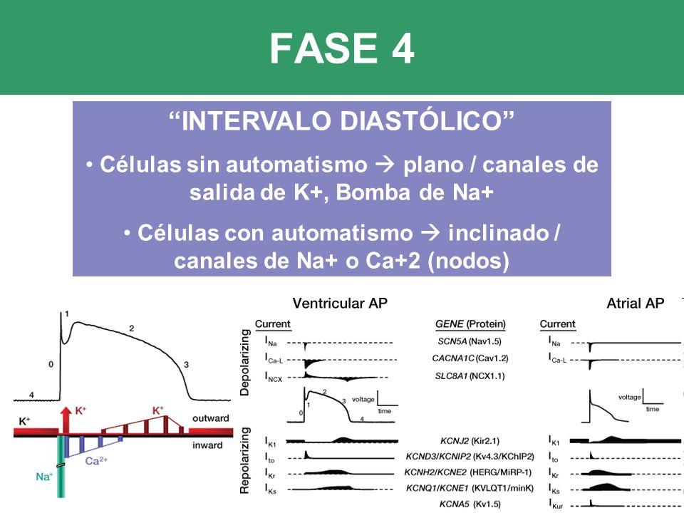 FASE 4 INTERVALO DIASTÓLICO