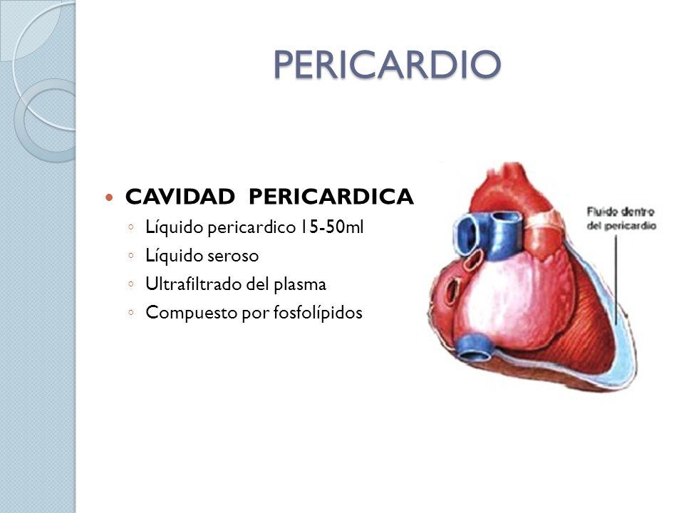PERICARDIO CAVIDAD PERICARDICA Líquido pericardico 15-50ml