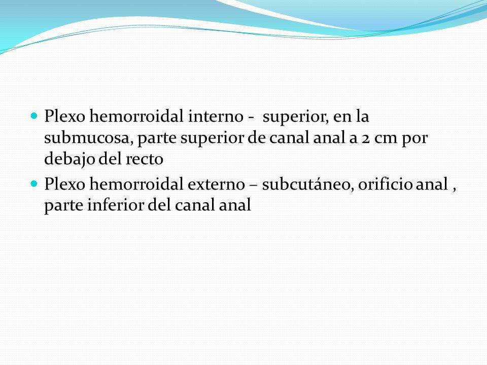 Plexo hemorroidal interno - superior, en la submucosa, parte superior de canal anal a 2 cm por debajo del recto