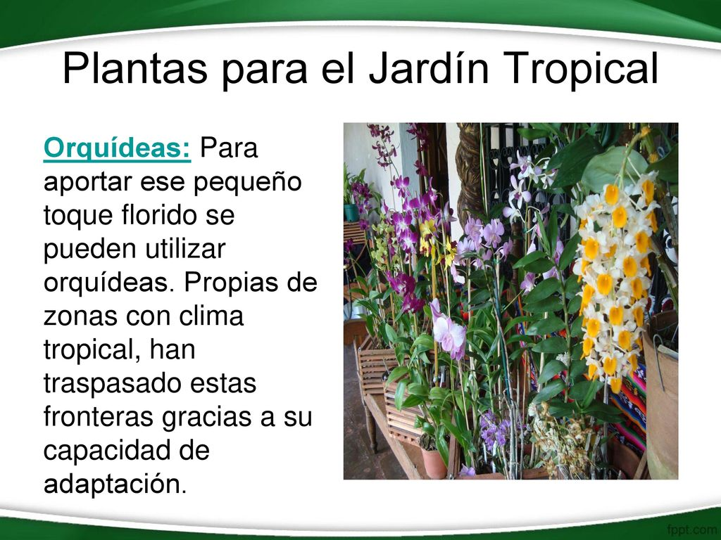 Jard n tropical ppt video online descargar for El jardin online