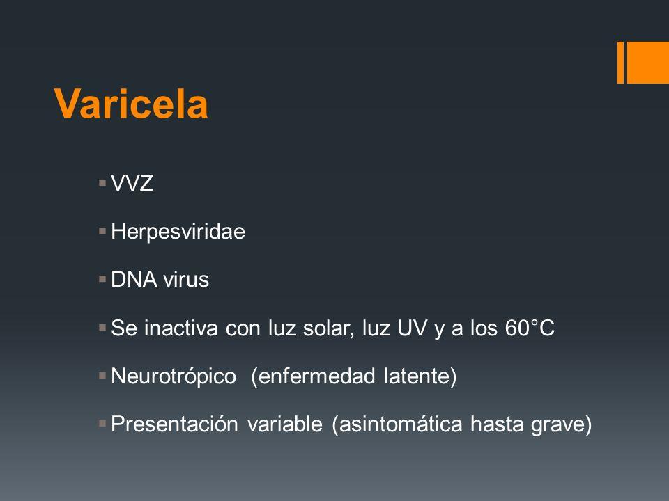 Varicela VVZ Herpesviridae DNA virus