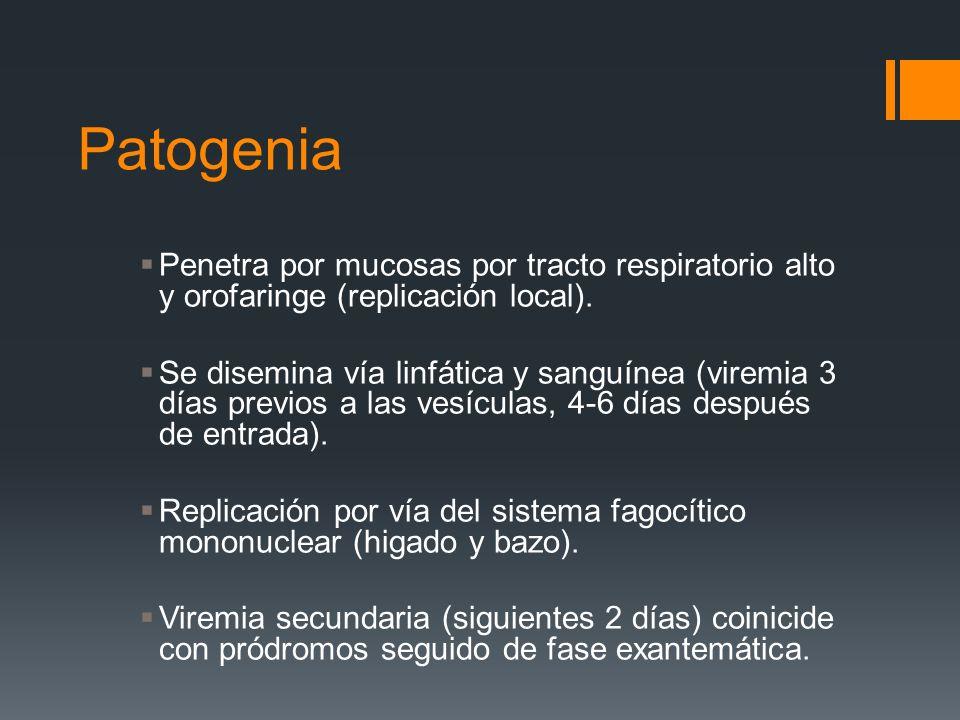 PatogeniaPenetra por mucosas por tracto respiratorio alto y orofaringe (replicación local).