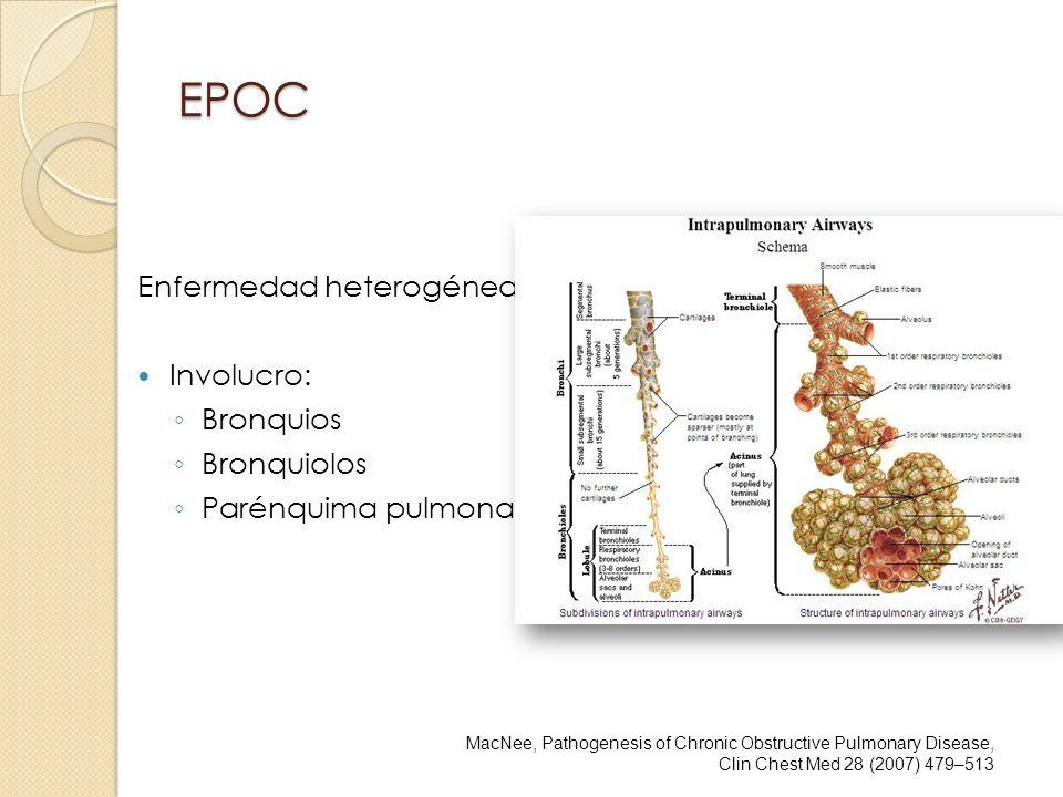 EPOC Enfermedad heterogénea Involucro: Bronquios Bronquiolos