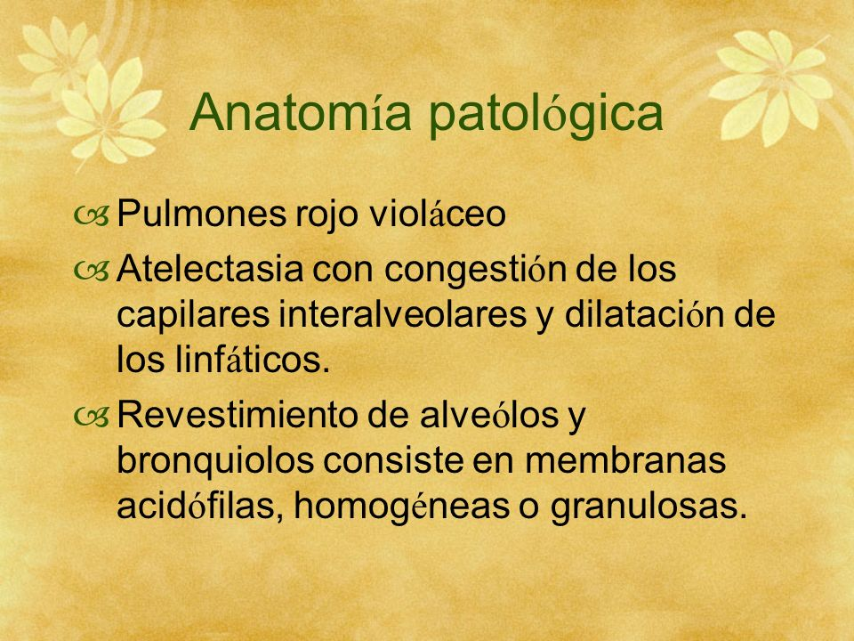 Anatomía patológica Pulmones rojo violáceo