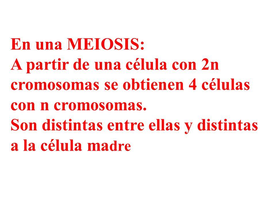 En una MEIOSIS:A partir de una célula con 2n cromosomas se obtienen 4 células con n cromosomas.