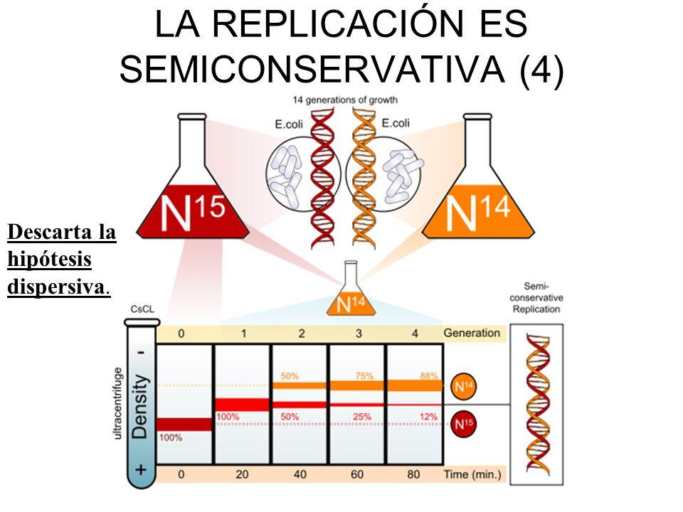 LA REPLICACIÓN ES SEMICONSERVATIVA (4)
