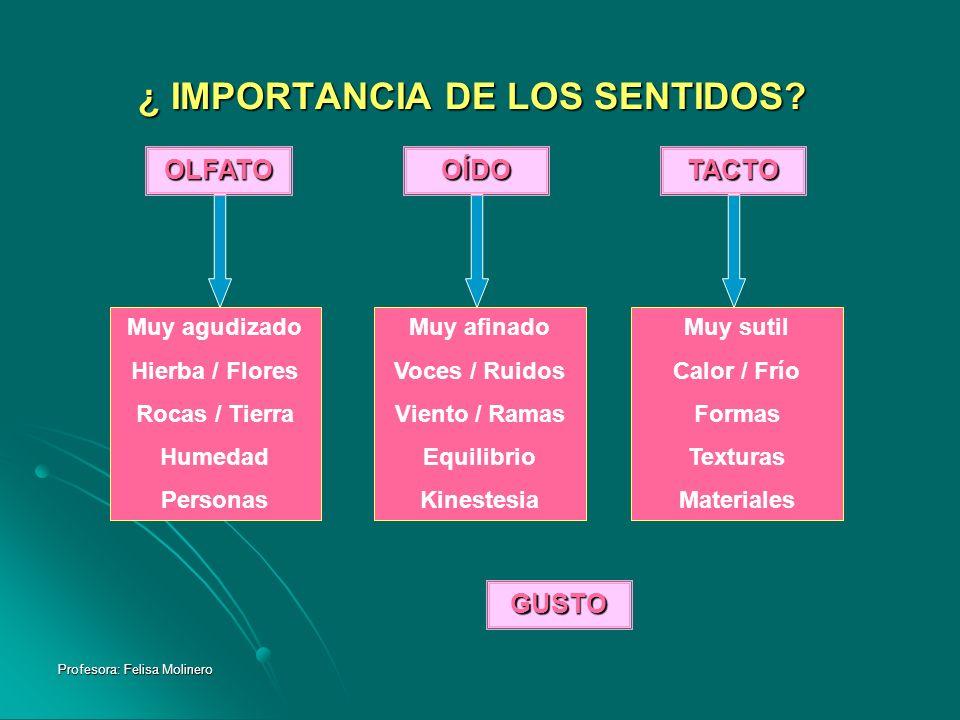 ¿ IMPORTANCIA DE LOS SENTIDOS