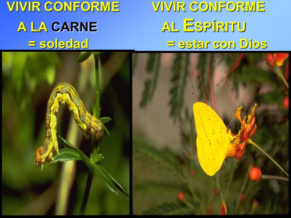 VIVIR CONFORME VIVIR CONFORME A LA CARNE AL ESPÍRITU = soledad = estar con Dios