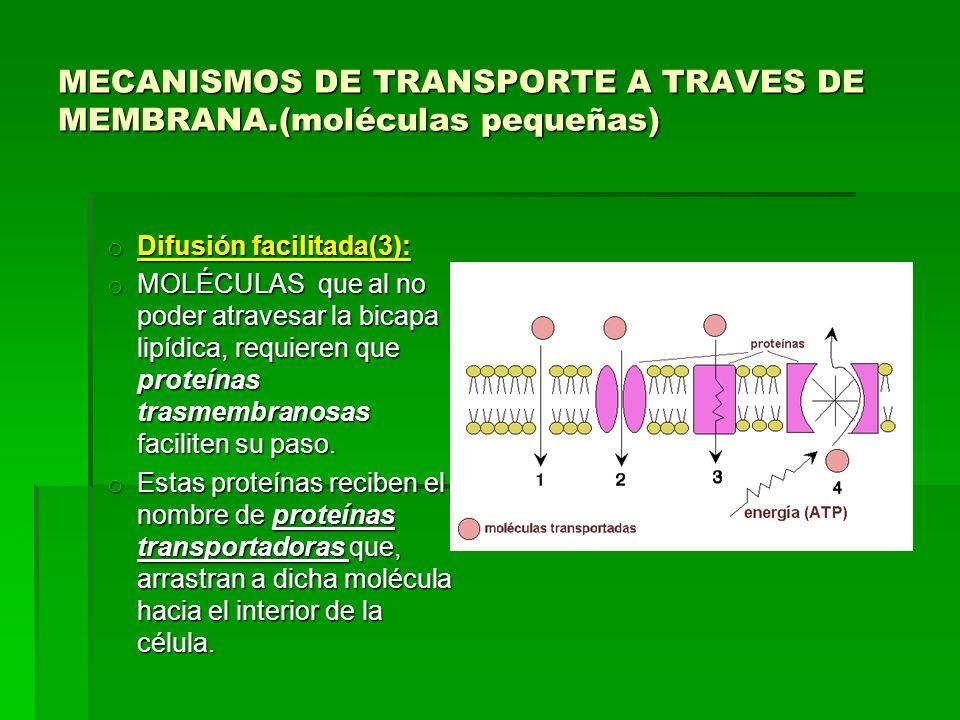 MECANISMOS DE TRANSPORTE A TRAVES DE MEMBRANA.(moléculas pequeñas)