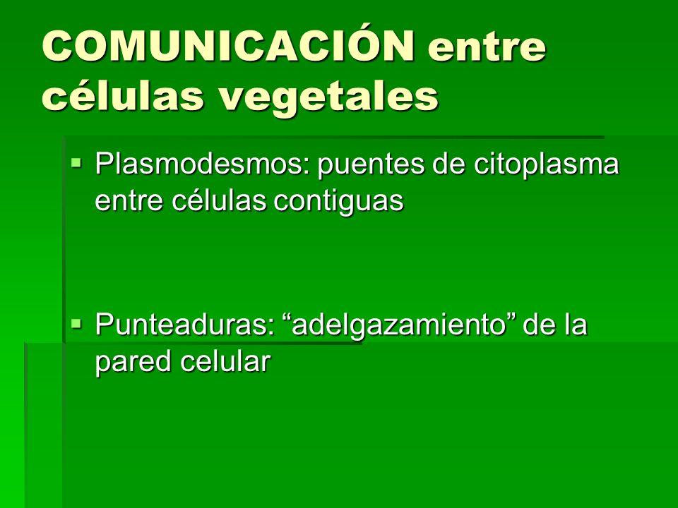 COMUNICACIÓN entre células vegetales