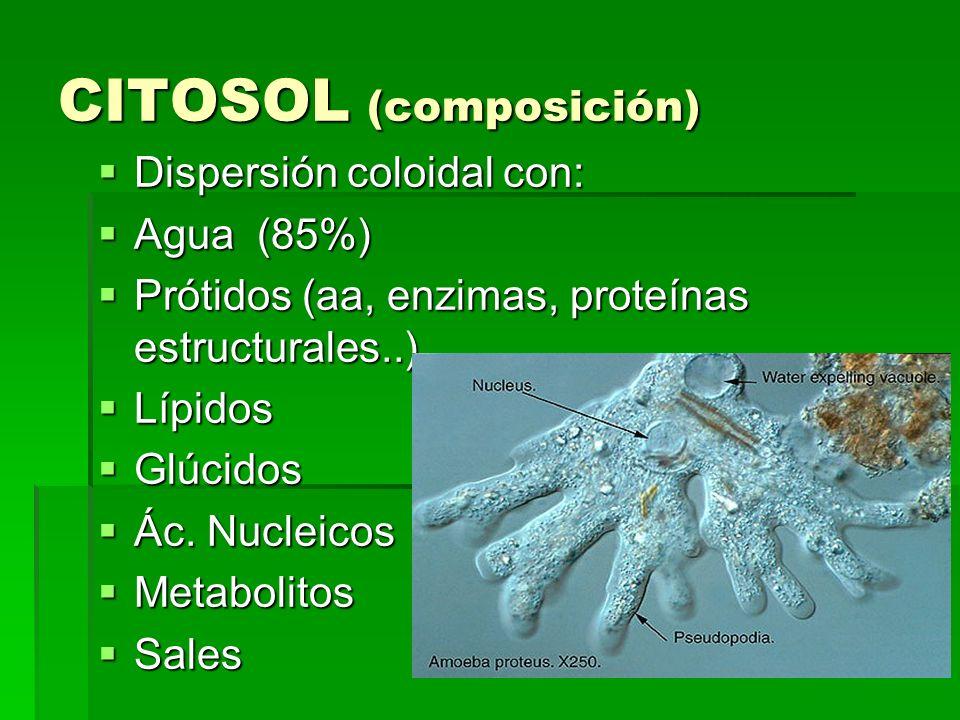 CITOSOL (composición)