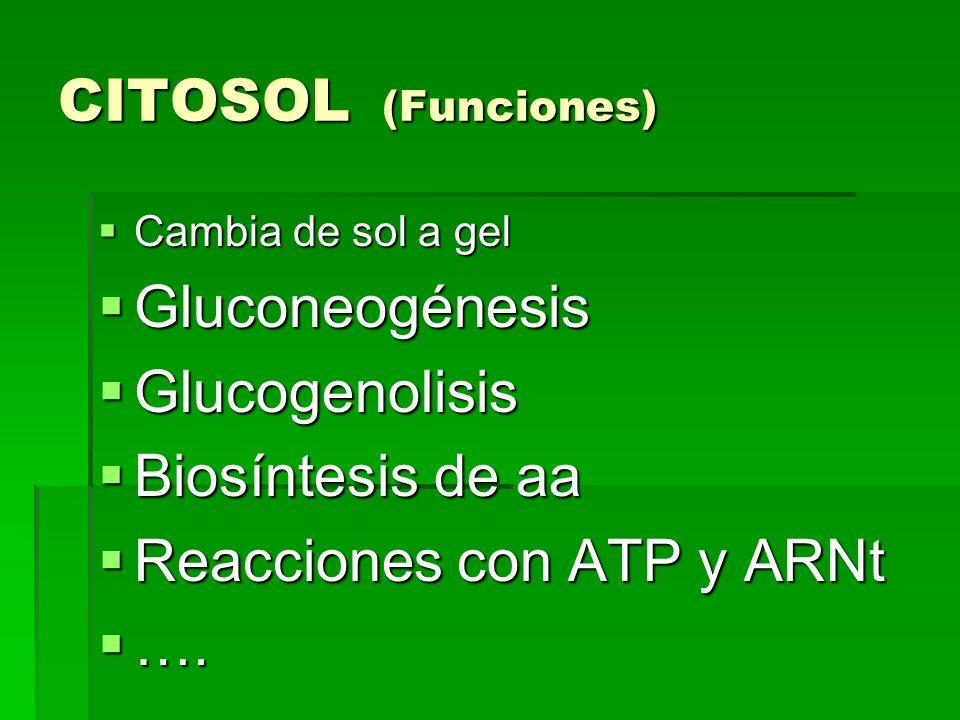 Reacciones con ATP y ARNt ….
