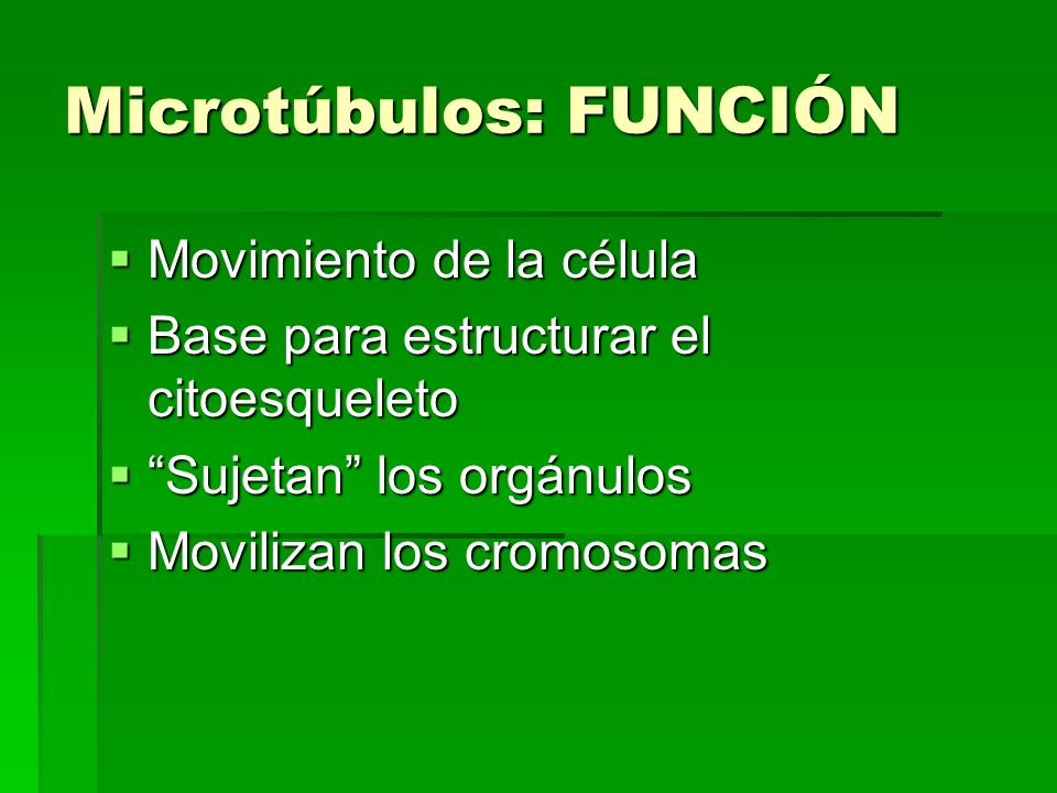 Microtúbulos: FUNCIÓN