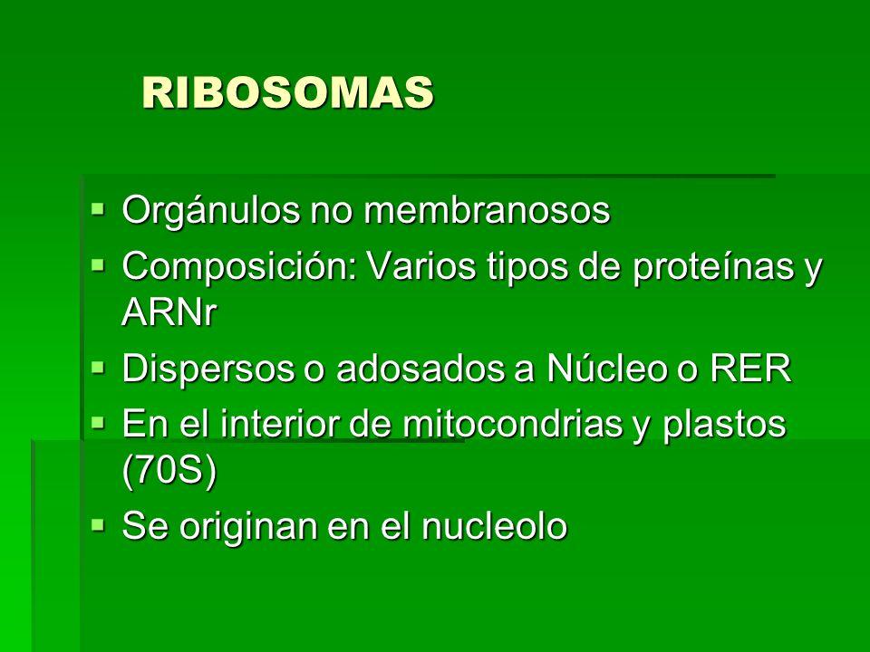 RIBOSOMAS Orgánulos no membranosos