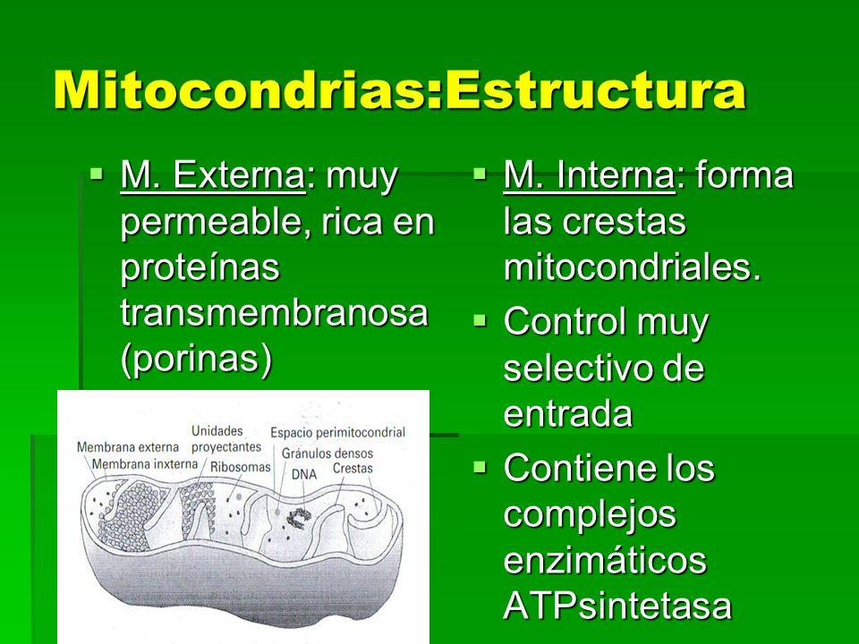 Mitocondrias:Estructura