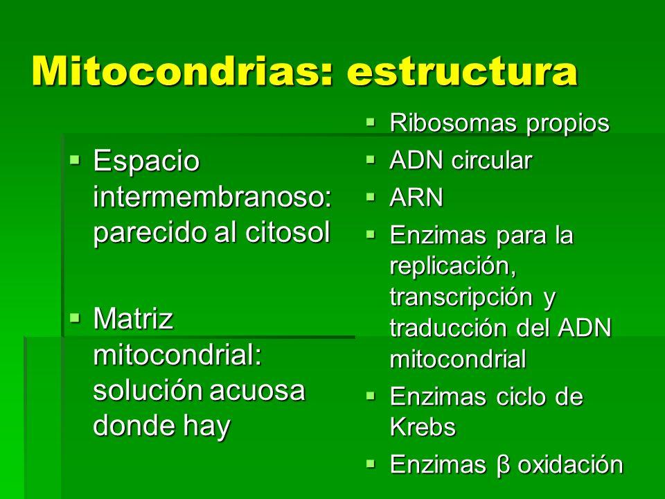 Mitocondrias: estructura