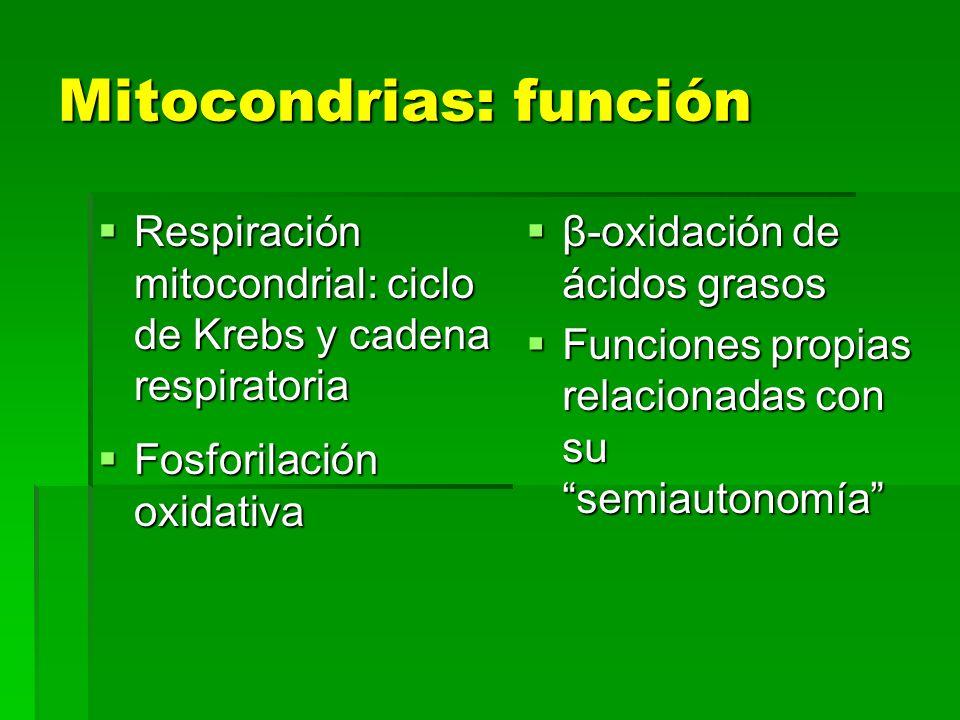 Mitocondrias: función
