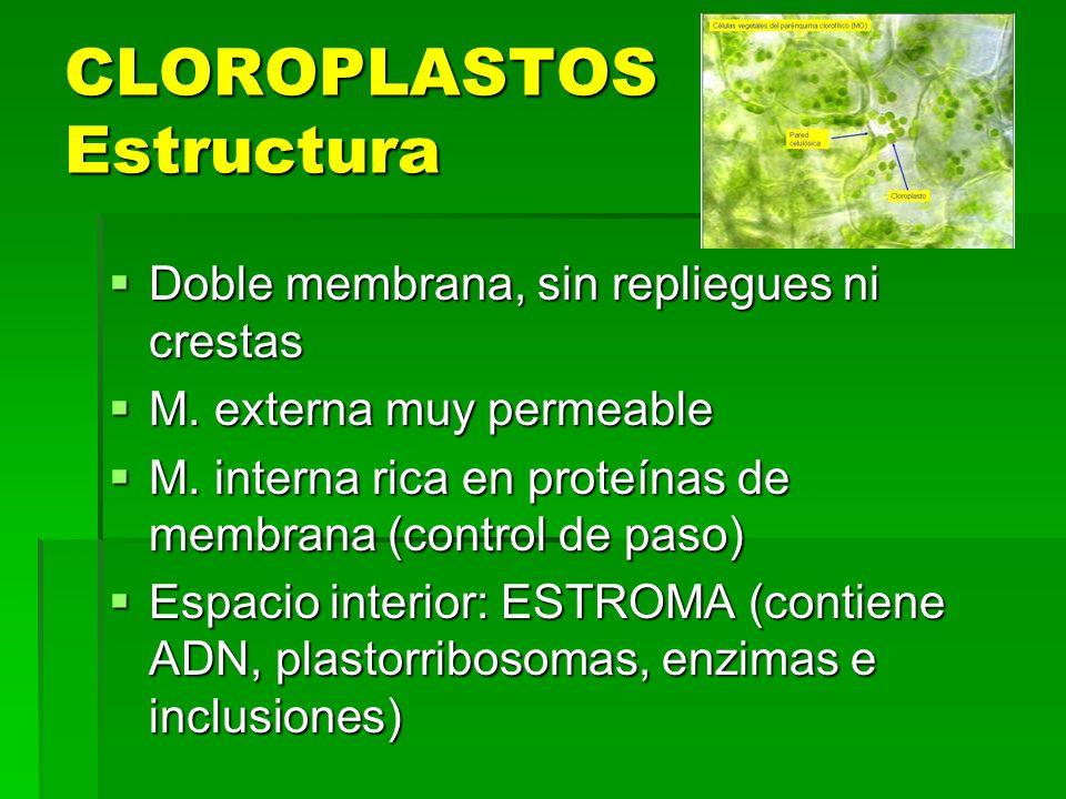 CLOROPLASTOS Estructura