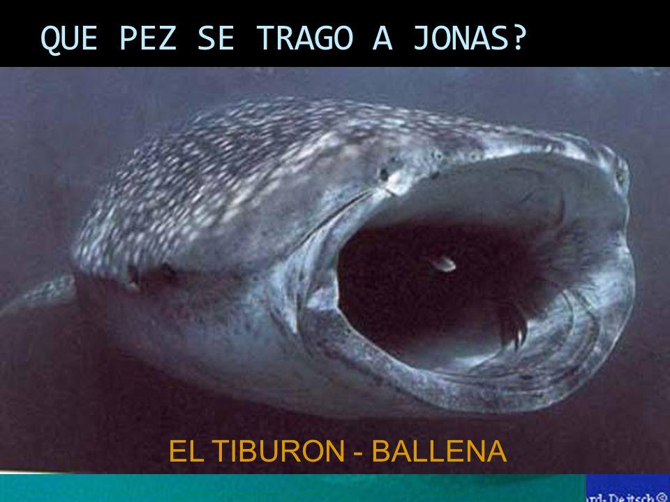 QUE PEZ SE TRAGO A JONAS EL TIBURON - BALLENA
