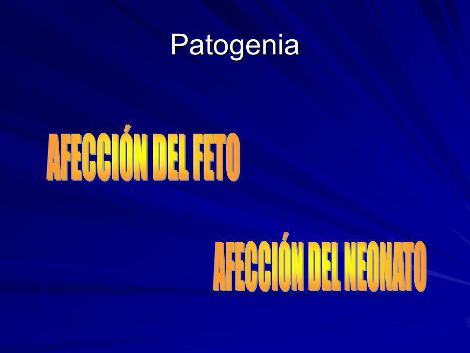 Patogenia AFECCIÓN DEL FETO Ghhg AFECCIÓN DEL NEONATO