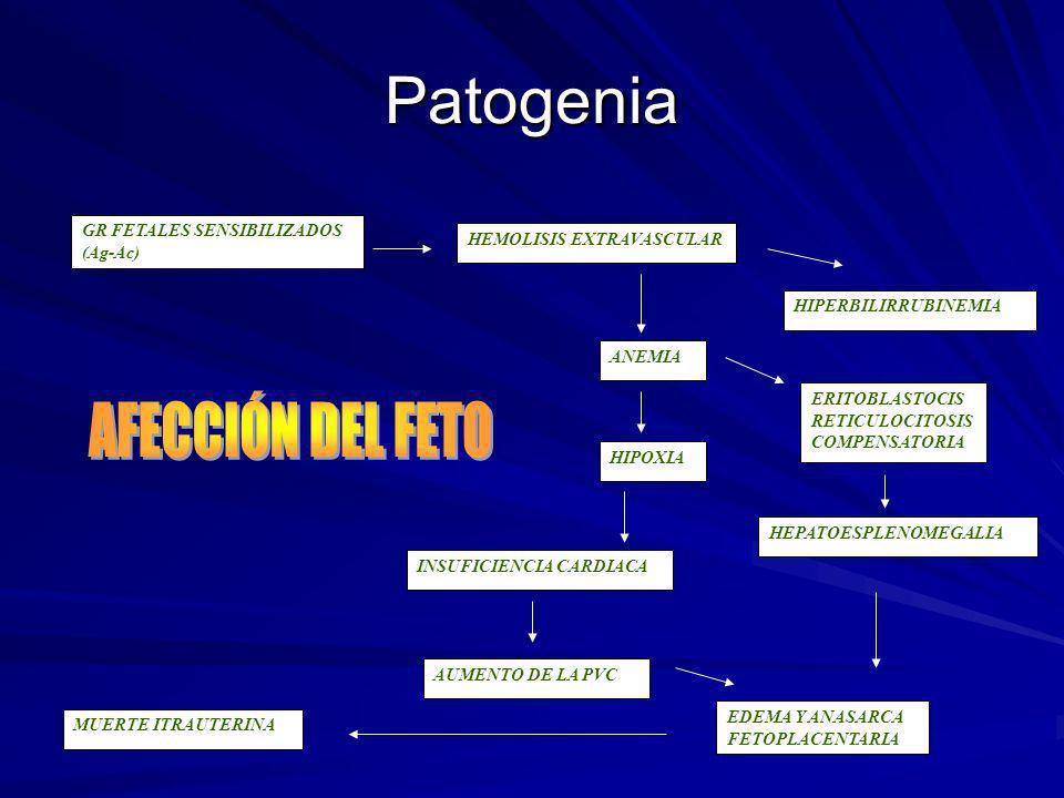 Patogenia AFECCIÓN DEL FETO GR FETALES SENSIBILIZADOS (Ag-Ac)