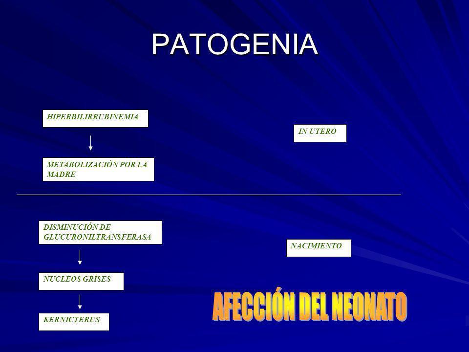 PATOGENIA AFECCIÓN DEL NEONATO HIPERBILIRRUBINEMIA IN UTERO