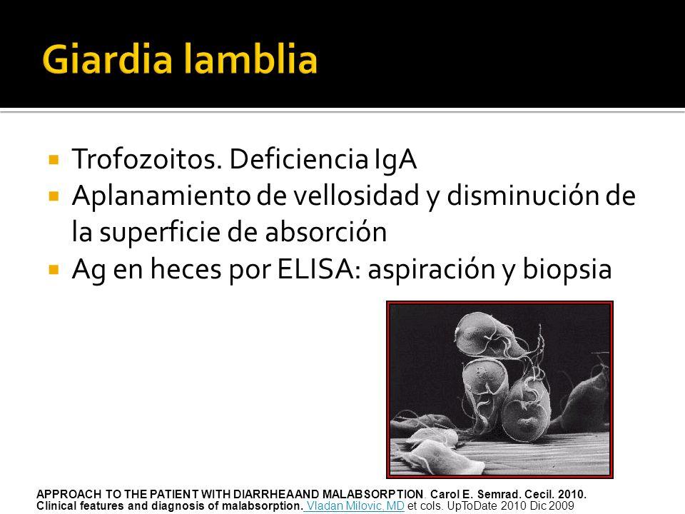 Giardia lamblia Trofozoitos. Deficiencia IgA
