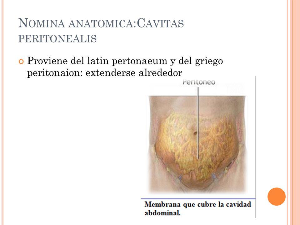 Nomina anatomica:Cavitas peritonealis