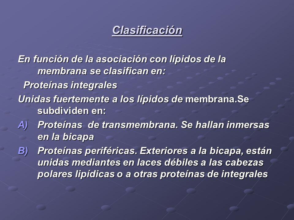 Clasificación En función de la asociación con lípidos de la membrana se clasifican en: Proteínas integrales.