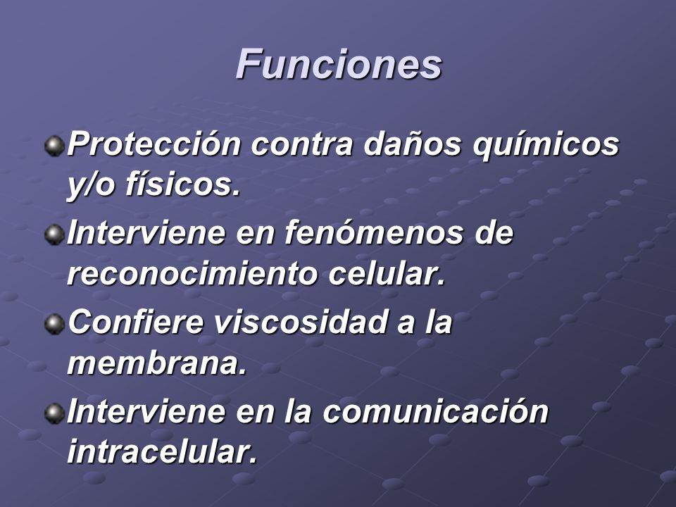 Funciones Protección contra daños químicos y/o físicos.
