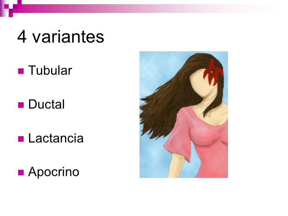 4 variantes Tubular Ductal Lactancia Apocrino