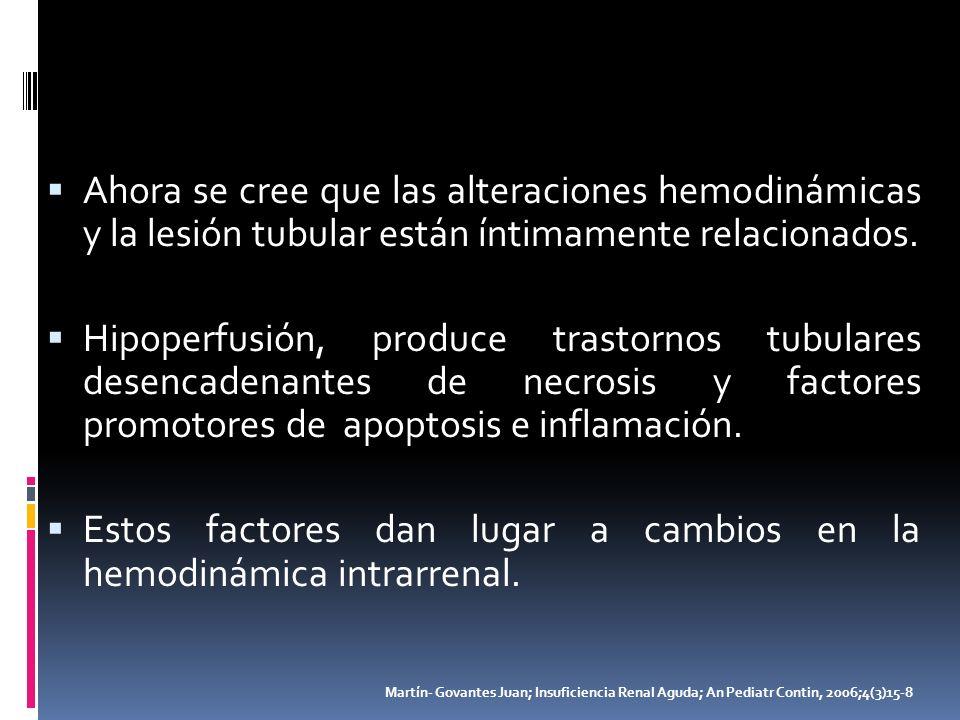Estos factores dan lugar a cambios en la hemodinámica intrarrenal.